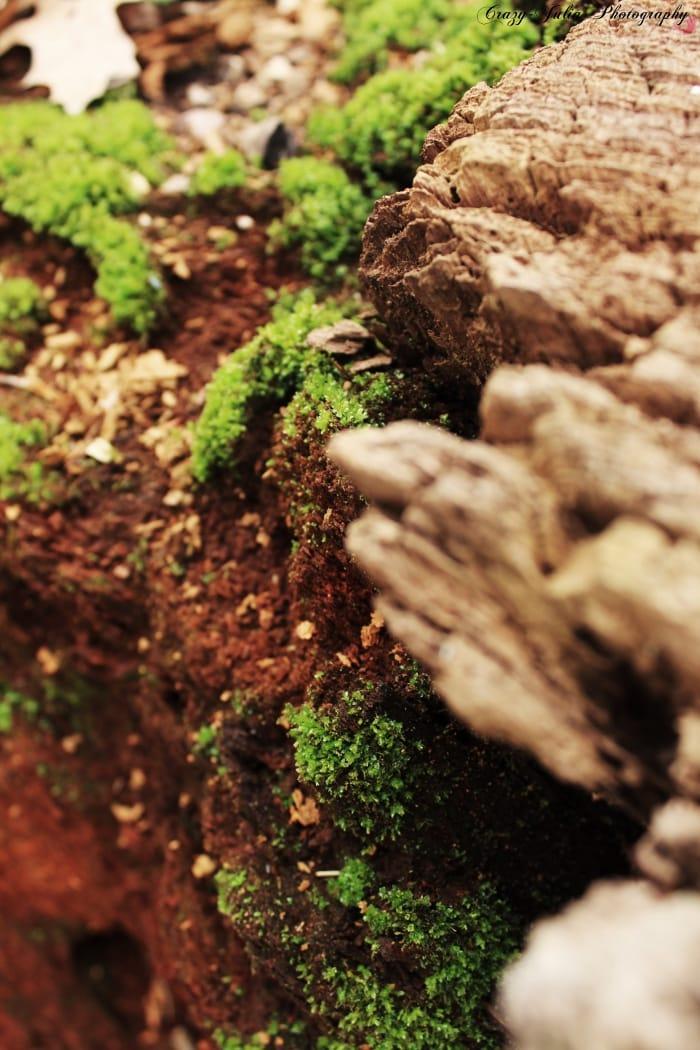 Moss auf Baum