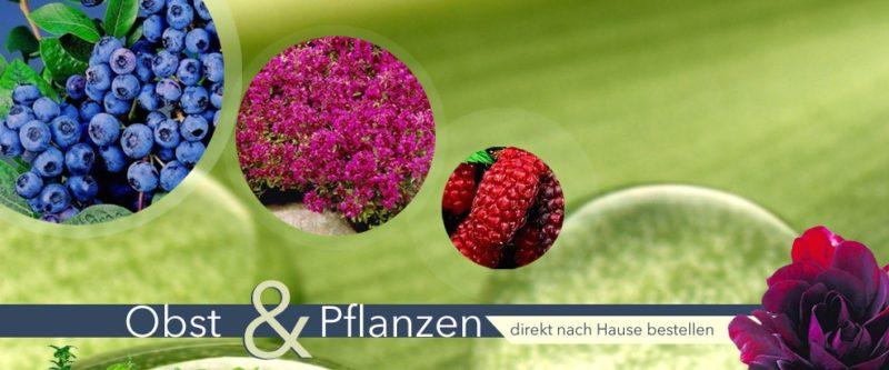 Obst und Pflanzen von Lidl