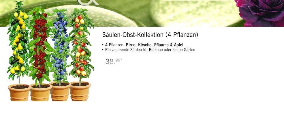 Birne, Apfel, Pflaume, Kirsch- Baum Kollektion für den Balkon