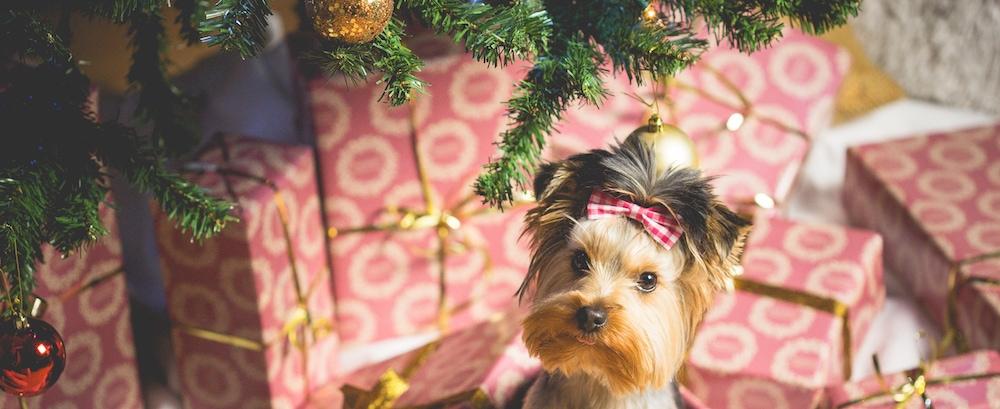 Hund in Geschenkbox
