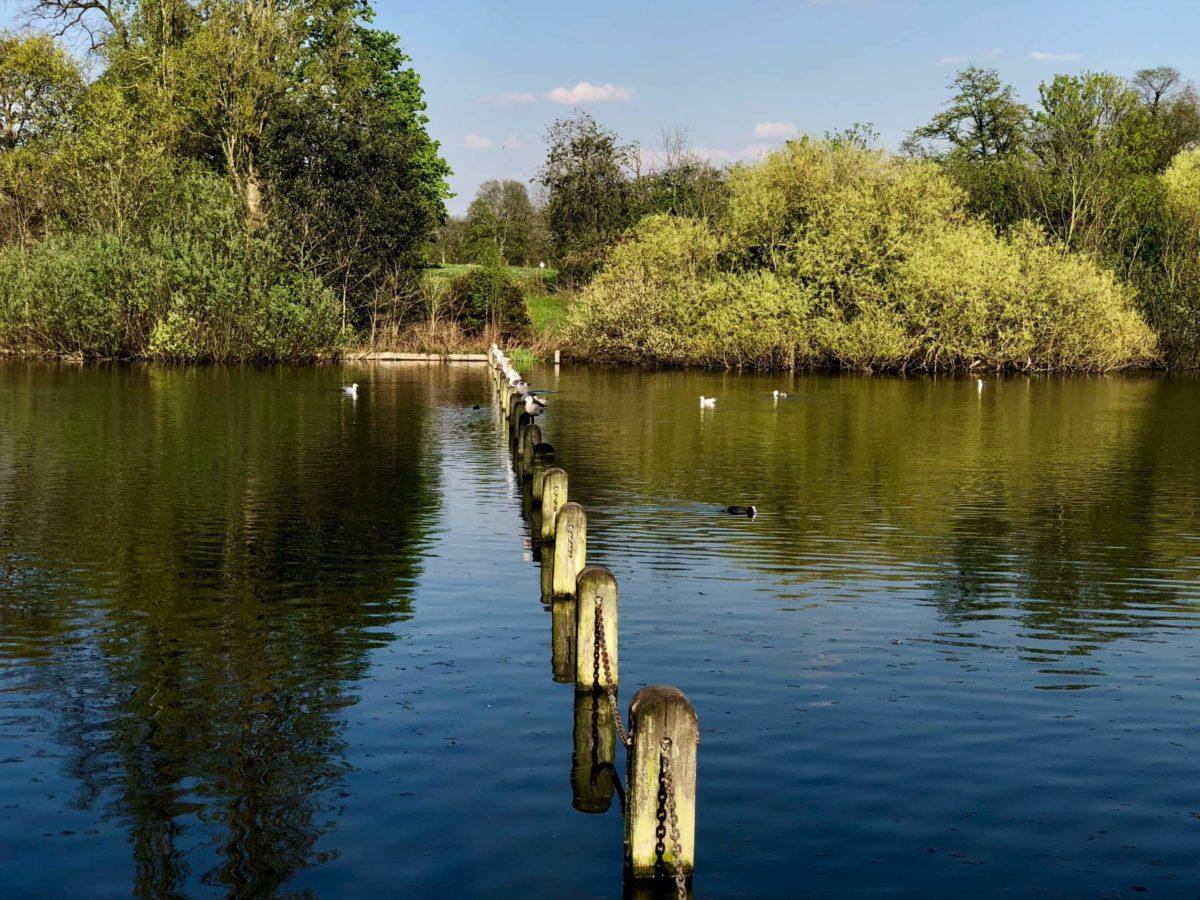 Wasservögel im Hyde Park
